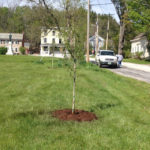 Historic Streetscape Tree Planting